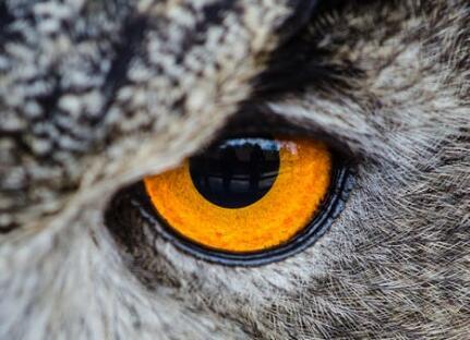 近视眼如何恢复视力