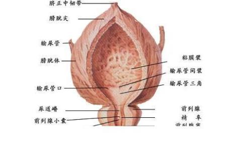 什么是前列腺增生