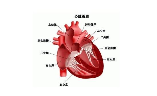 风湿性心脏病是怎么引起的