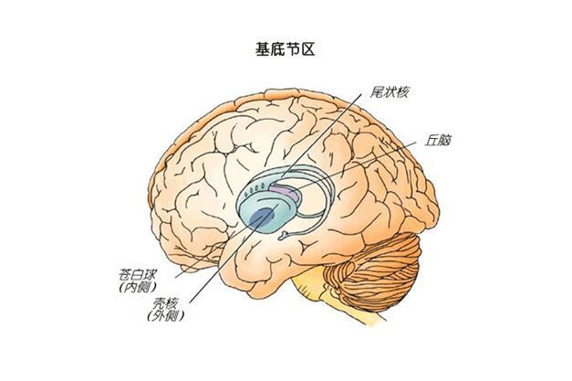 脑干出血后遗症有哪些
