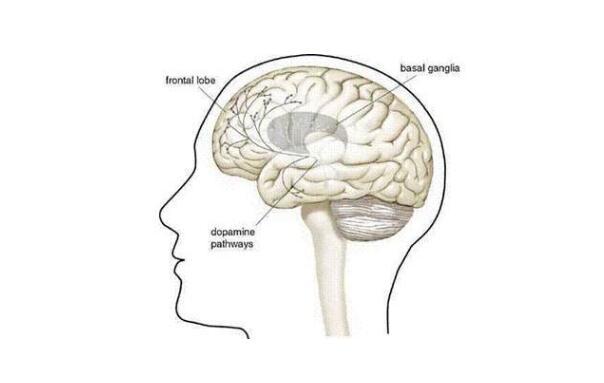 脑炎和脑膜炎的区别